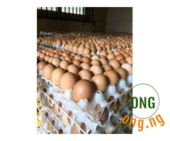 Fresh Harvested eggs for sale