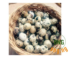 The good and wonderful works of QUAIL EGGS.