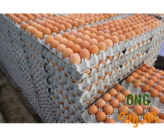 Fresh Jombo eggs