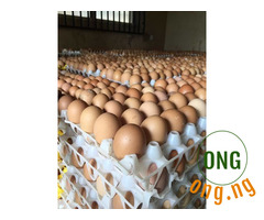 Big eggs on affordable price